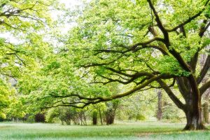Significant Ways to Evaluate Trees Health