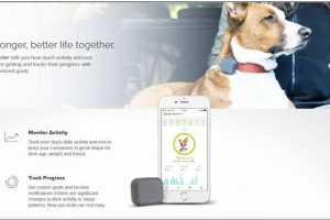ten-reasons-why-you-should-track-your-dog-with-gps-tracker-device